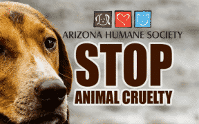 Historic New Anti-Cruelty Law to be Effective